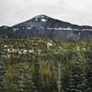 Oregon Cascade Range Forest Poster