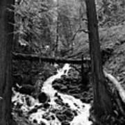 Oregon River Black And White Poster