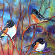 Orioles In Dogwood Poster