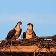 Osprey At Home Poster