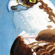 Osprey Eye Poster