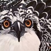 Osprey Eyes  Poster