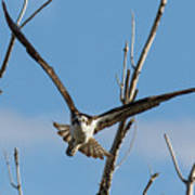 Osprey Launches Head On Poster