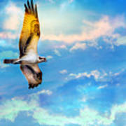 Osprey Soaring High Against A Beautiful Sky Poster