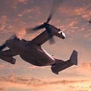 Ospreys In Flight Poster
