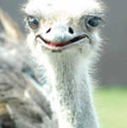Ostrich Grin Poster