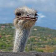 Ostrich Head Poster