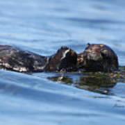 Otter Bliss Poster