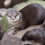 Otters In Arms Poster
