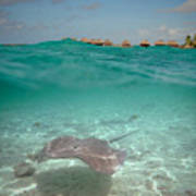 Over-under Water Of A Stingray At Bora Bora Poster