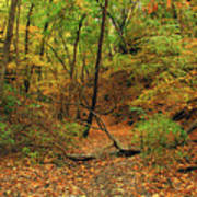Owl Canyon In Autumn 2 Poster