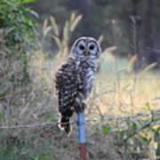 Owl Cherish This Moment Forever Poster