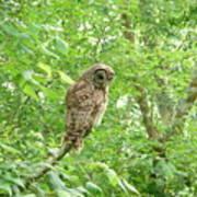 Owl II Poster