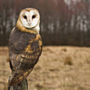 Owl Looking At Camera Poster by Jody Trappe Photography
