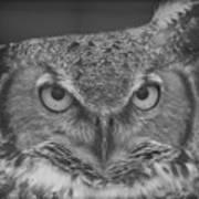 Owl Love  Poster