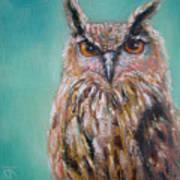 Owl No.5 Poster