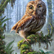 Owl Perch Poster