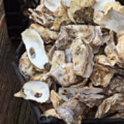 Oyster Shells Poster