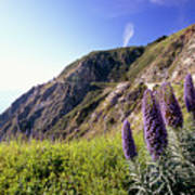 Pacific Coast View With Blue Wildflowers Poster by George Oze