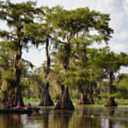 Paddling In The Bayou Poster