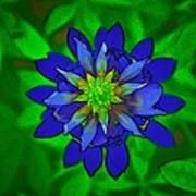 Painted Bluebonnet Poster