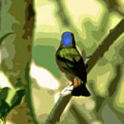 Painted Bunting Cutout Poster