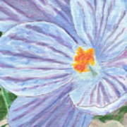 Painted Crocus Poster