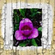 Painted Flower With Peeling Effect Poster