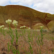 Painted Hills White Wildflowers Poster