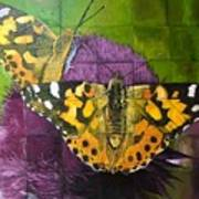 Painted Lady Butterflies Poster