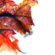 Painted Leaf Series 1 Poster
