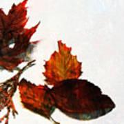 Painted Leaf Series 5 Poster