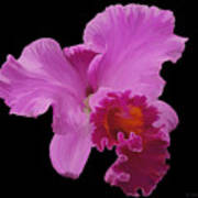 Painted Orchid Poster