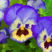 Painterly Pansies Poster