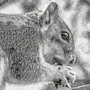Painted Squirrel Poster