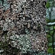 Painted Treebark Woodcut Poster