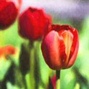 Painted Tulips Poster