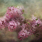 Painterly Lilac Blossom Photograph Poster