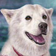 Painting Of A White And Furry Alaskan Malamute Poster