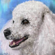 Painting Of A White Fluffy Poodle Smiling Poster