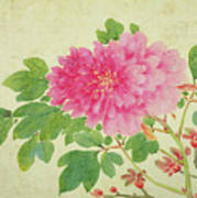 Painting Of Peonies Poster