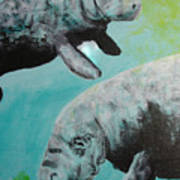Pair Of Florida Manatees Poster