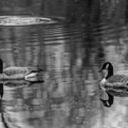 Pair Of Geese, Nisqually National Wildlife Refuge, Washington, 2016 Poster