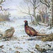 Pair Of Pheasants With A Wren Poster