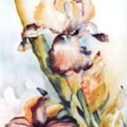 Pale Iris Poster