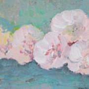 Pale Pink Peonies Poster