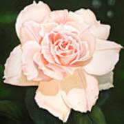 Pale Pink Rose Poster