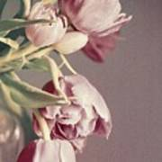 Pale Tulips Poster