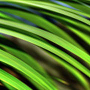 Palm Abstract By Kaye Menner Poster