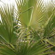 Palm Bush Poster